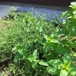 0730花壇