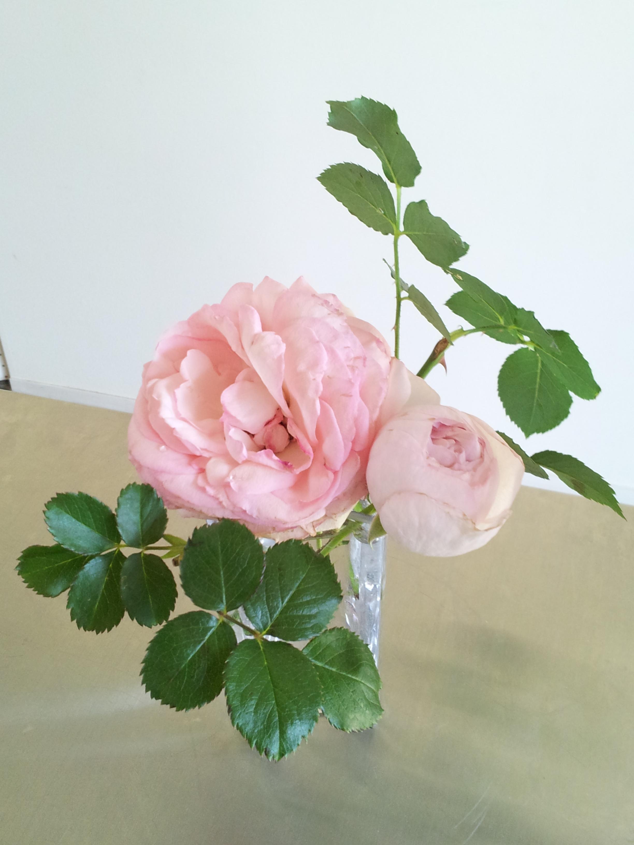 優雅なバラの季節