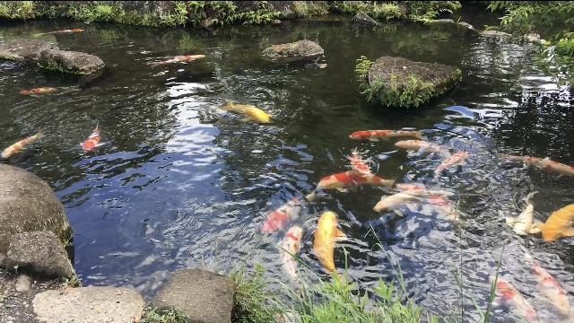 海無し県埼玉の水族館